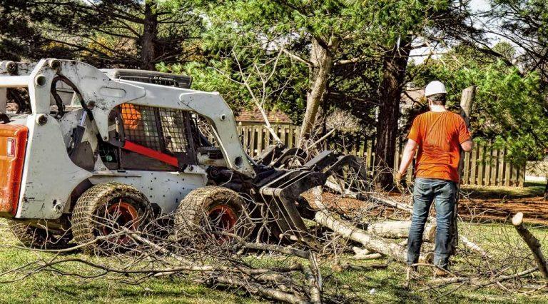 tree limbs removal