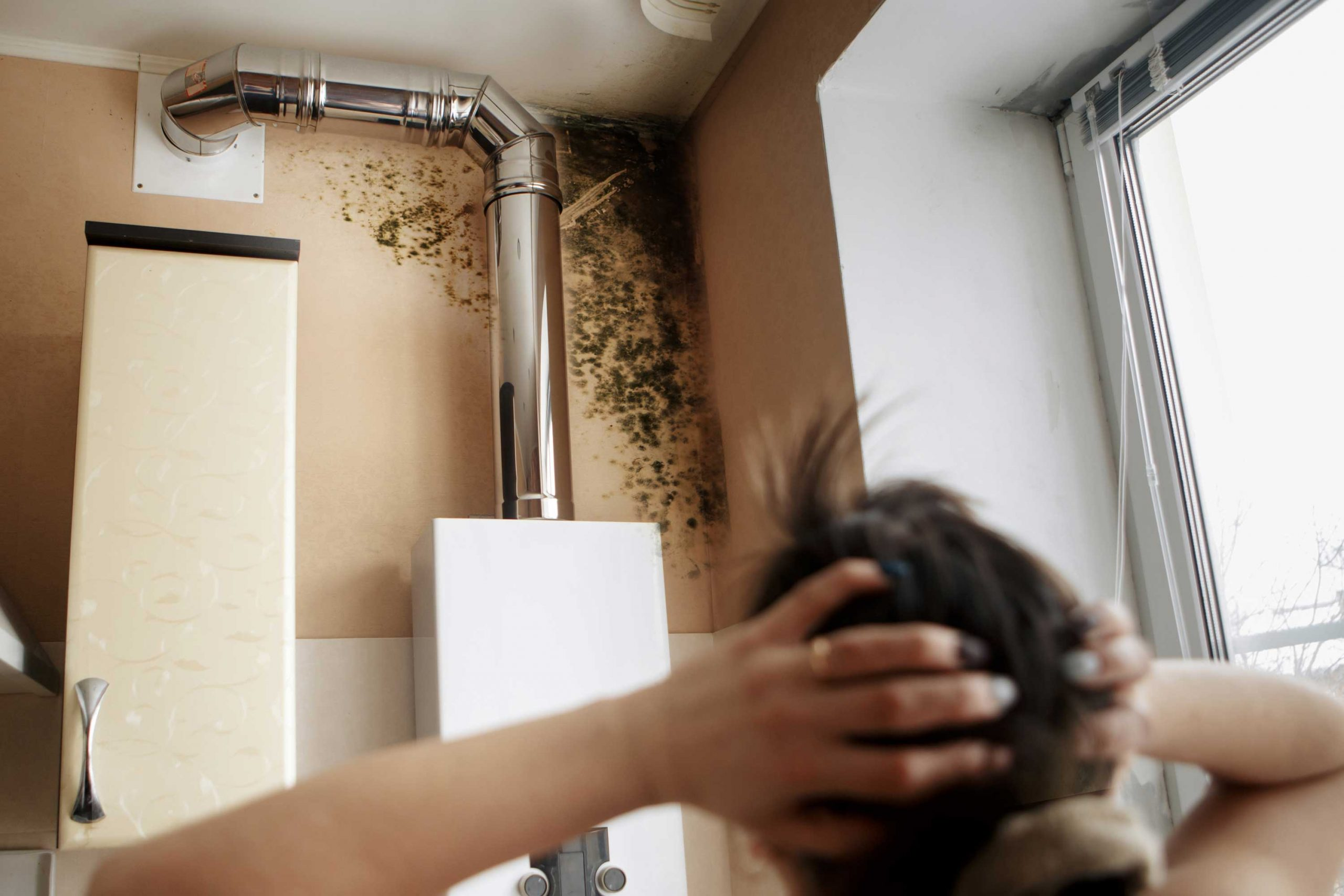 mold damage in residential property