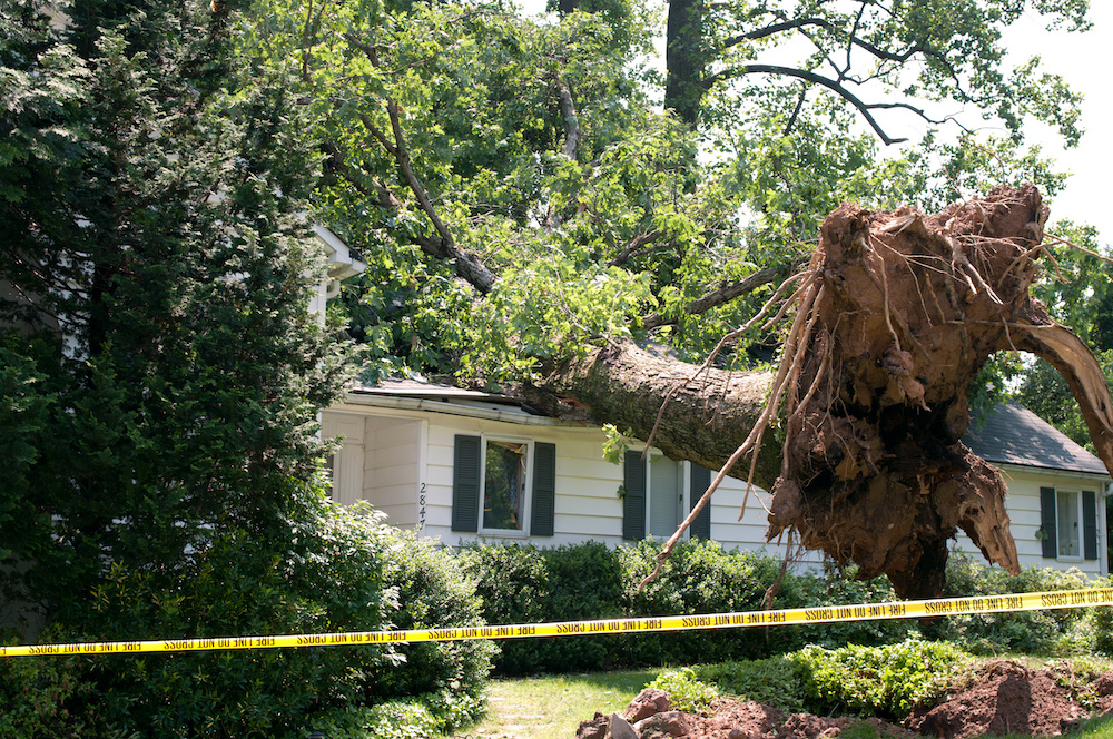 Uprooted tree fell on a house, causing severe weather damage