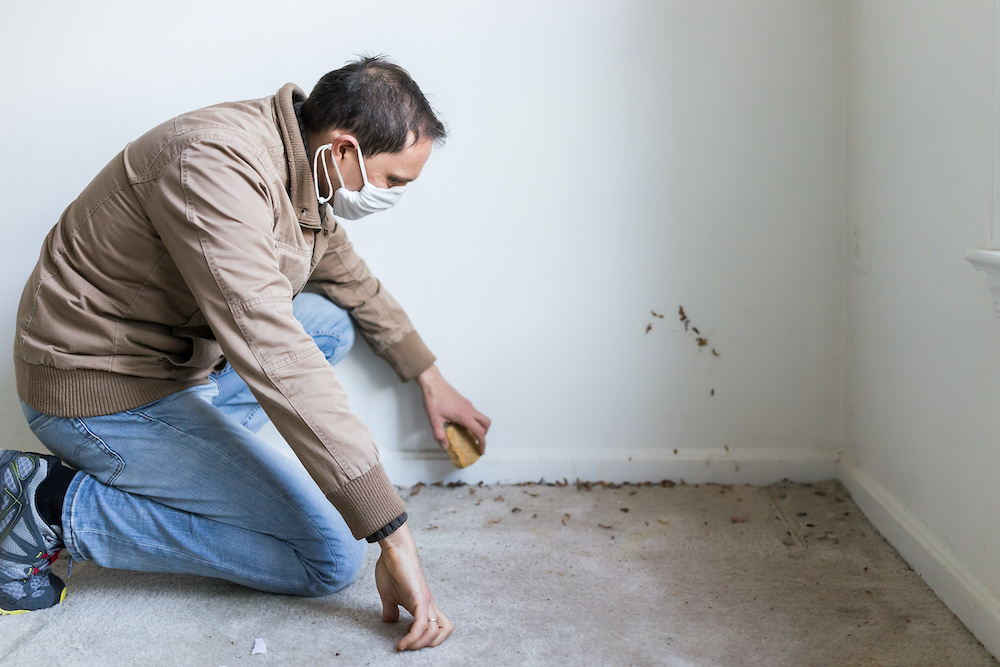 Removing mold from a carpet following water damage.