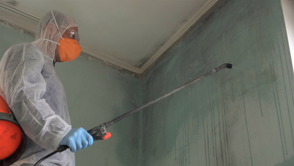 A mold removal company sprays a wall with chemicals.